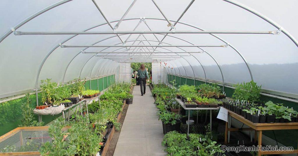 mô hình nhà kính nông nghiệp trồng rau hiệu quả